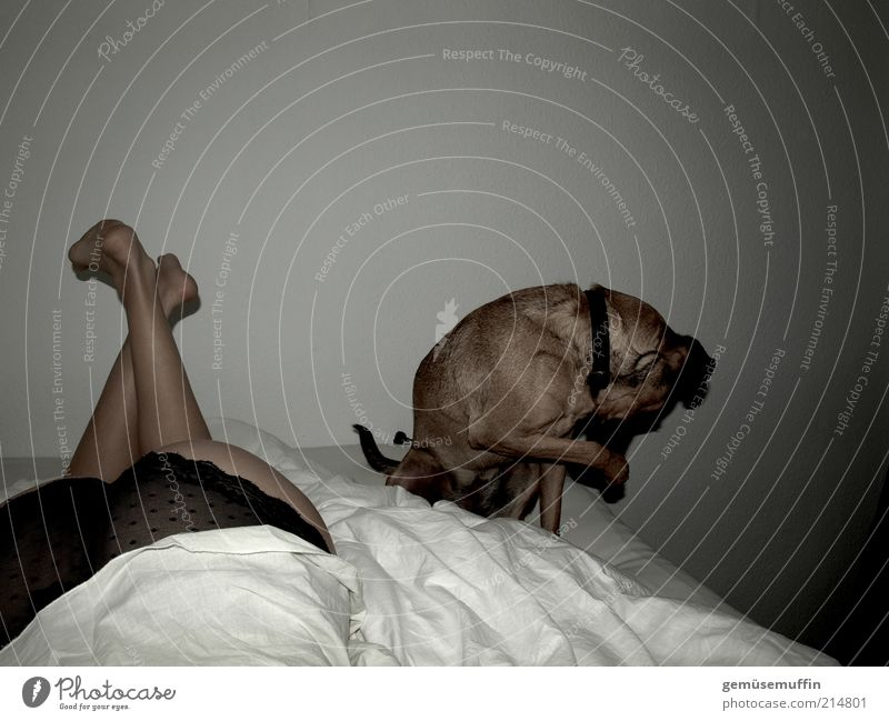 Beautiful Animal Relaxation Feminine Wall (building) Movement Dog Contentment Together Skin Natural Authentic Bed Bottom Curiosity Observe
