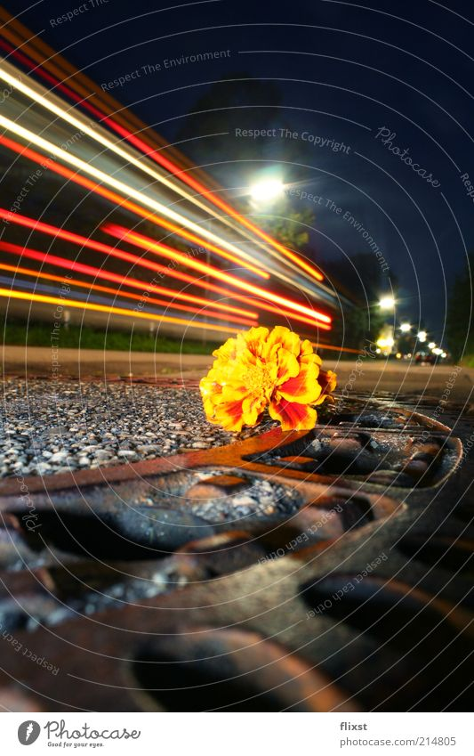 Summer Street Dark Blossom Movement Lanes & trails Road traffic Drainage Exceptional Lantern Gully Visual spectacle City Long exposure Transport Town