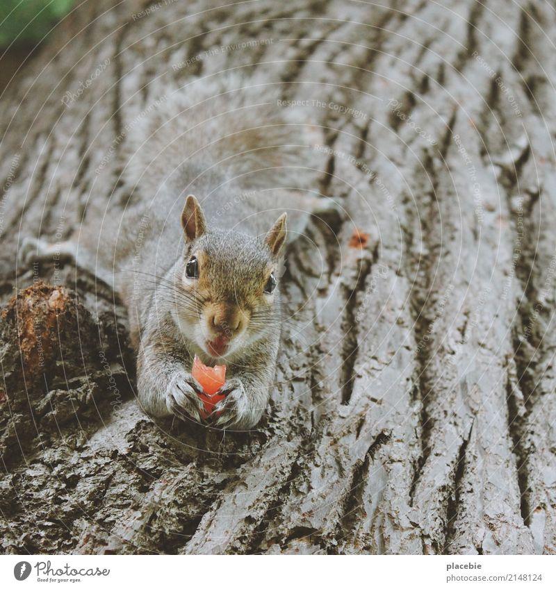 Nature Summer Tree Animal Eating Wood Small Happy Gray Brown Trip Park Lie Wild animal Success Adventure