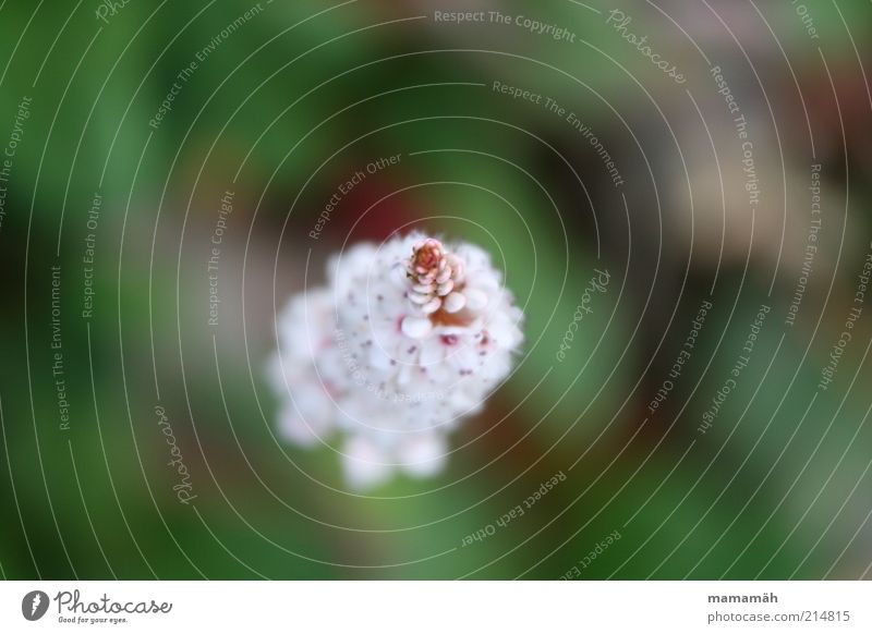Nature White Flower Green Blossom Soft Point Delicate Blossoming Blossom leave