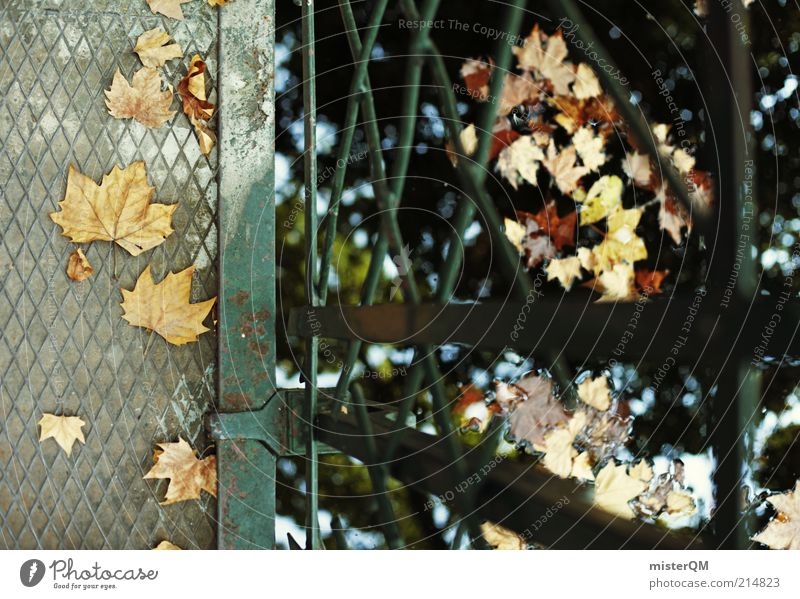 Nature Water Leaf Loneliness Autumn Sadness Lake Contentment Environment Time Bridge Esthetic To go for a walk To fall Seasons Footbridge
