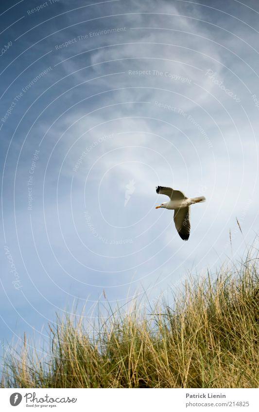 Nature Beautiful Sky Ocean Plant Summer Beach Vacation & Travel Clouds Animal Relaxation Grass Landscape Bird Coast Wind