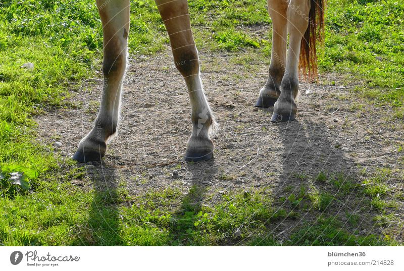Nature Joy Animal Life Meadow Grass Power Leisure and hobbies Elegant Free Natural Horse Stand Trust Strong Pet