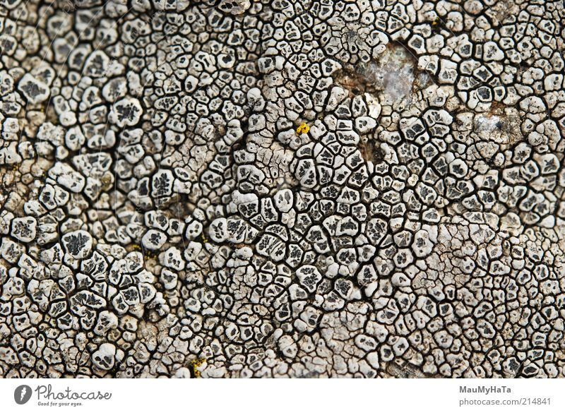 Lichen Nature Elements Clouds Climate Moss Leaf Exotic Rock Mountain Looking Old Dark Fresh Cheap Good Close-up Detail Macro (Extreme close-up) Abstract