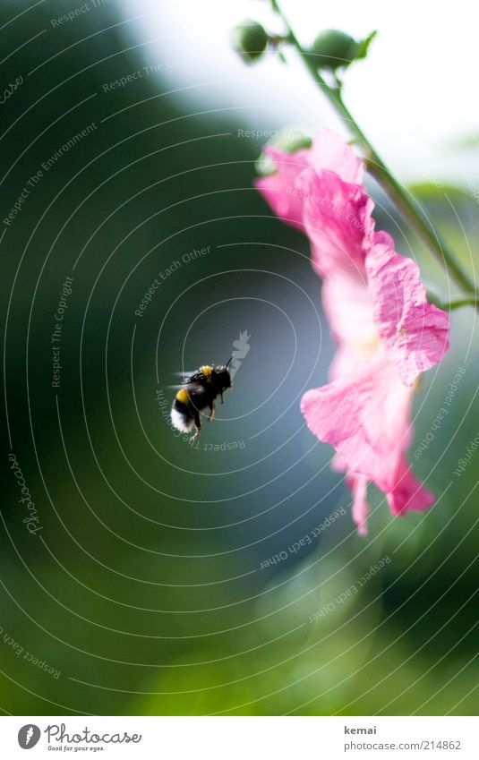 Nature Flower Green Plant Summer Animal Blossom Spring Garden Warmth Pink Environment Flying Wing Insect Bee