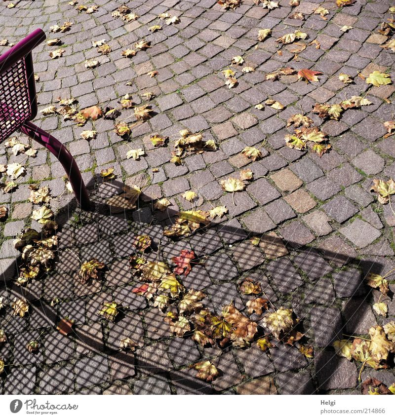 Autumn casts its shadows... Beautiful weather Leaf Deserted Lanes & trails Bench Stone Metal Relaxation Lie Stand To dry up Esthetic Exceptional Natural Dry