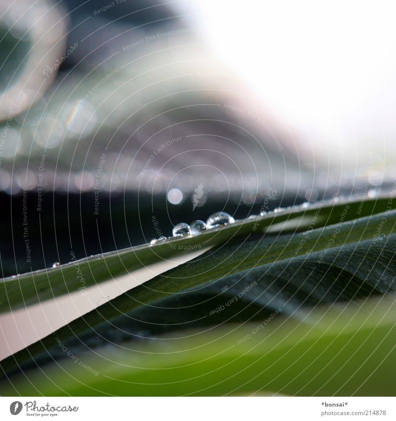 Nature Green Plant Leaf Life Glittering Wet Drops of water Energy Fresh Growth Near Blossoming Fluid Dew