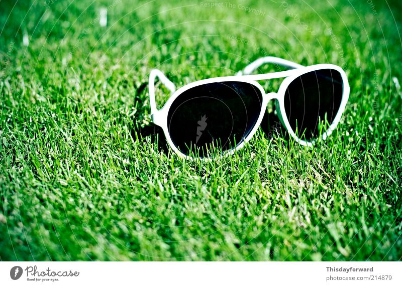 Sunglasses Lifestyle Style Joy Tourism Summer Summer vacation Sunbathing Nature Earth Sunlight Beautiful weather Grass Garden Plastic To enjoy Hang Smiling Lie