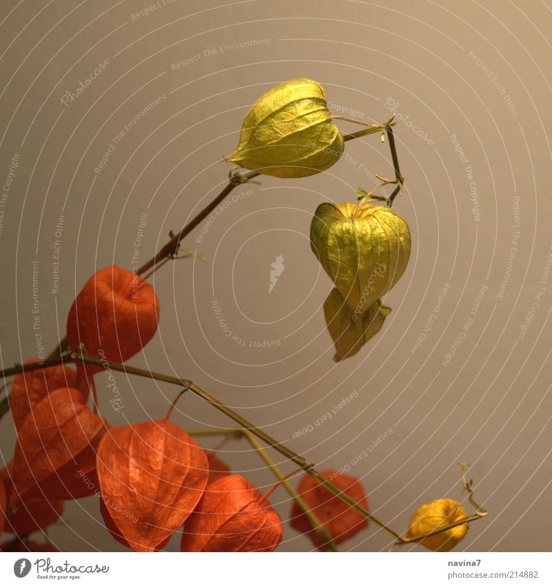 Nature Beautiful Flower Green Plant Red Calm Autumn Emotions Blossom Happy Contentment Moody Elegant Fresh Esthetic