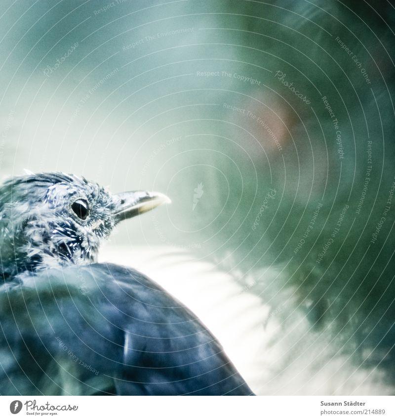 Old Tree Summer Animal Sadness Bird Wait Gloomy Break Authentic Wild animal Wing Exceptional Animal face Observe Pelt