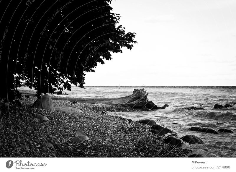 Nature Water Tree Ocean Beach Loneliness Relaxation Stone Sand Coast Waves Rock Island Lakeside Tree trunk Gravel