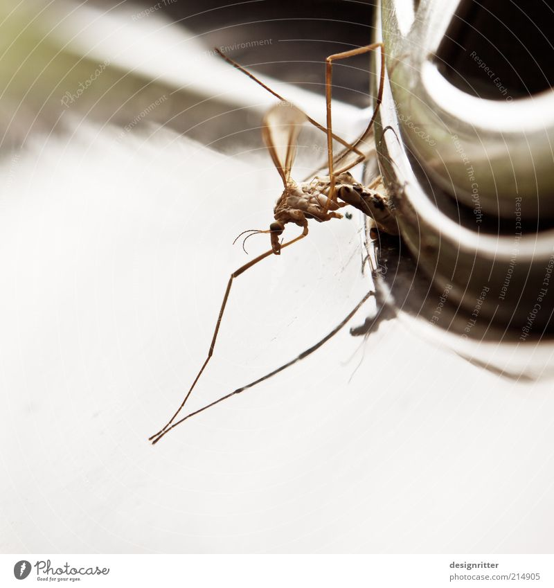 insect killers Means of transport Dead animal Insect Mosquitos Crane fly Mosquito repellent Plague of mosquitos Death Car Colour photo Subdued colour