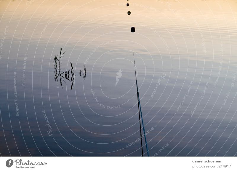 Water Blue Calm Lake Rope Surface Peaceful Maritime Buoy Boundary Surface of water Part of the plant Water reflection
