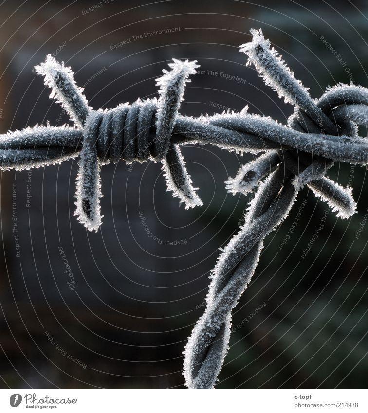 Cold captivity Environment Nature Ice Frost Snow Deserted Metal Steel Crystal Freeze Firm Gray Colour photo Exterior shot Close-up Detail