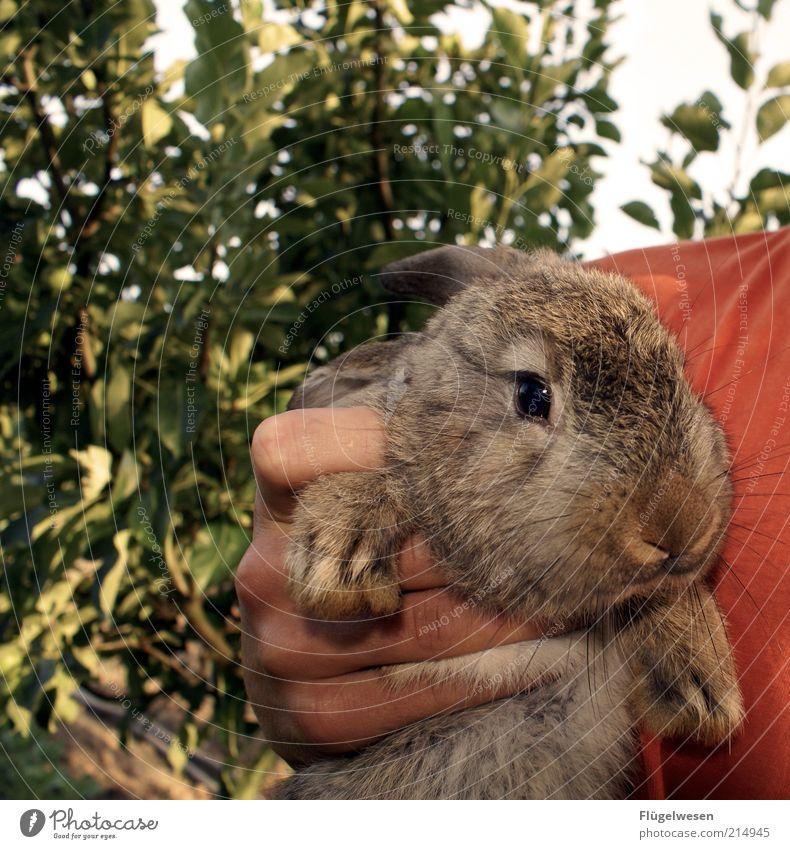 Beautiful Hand Animal Eyes Wild animal Cute Nose To hold on Near Pelt Pet Hare & Rabbit & Bunny Captured Farm animal Love of animals Easter Bunny