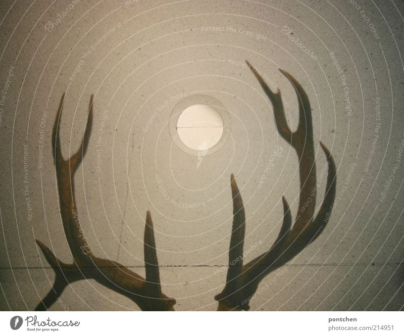 Antlers through the viewfinder of a medium format camera Style Living or residing Arrange Wild animal Deer 1 Animal Exceptional conceit Sharp-edged Brown horns