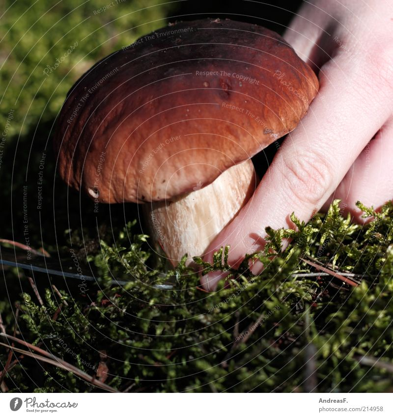 Nature Hand Plant Food Autumn Natural Fingers Search Discover Organic produce Mushroom Moss Find Accumulate Woodground Mushroom cap