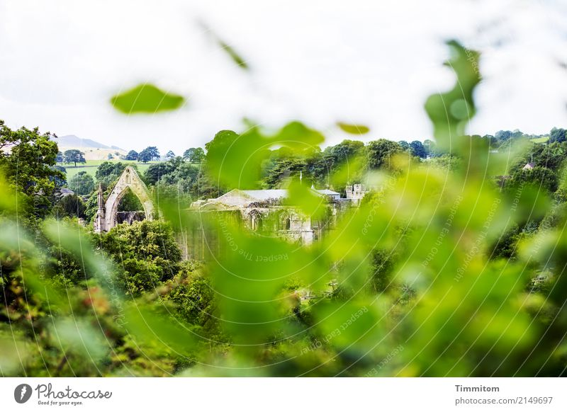 Nature Vacation & Travel Green Landscape Environment Wall (building) Wall (barrier) Manmade structures Tourist Attraction Ruin Great Britain Monastery Yorkshire