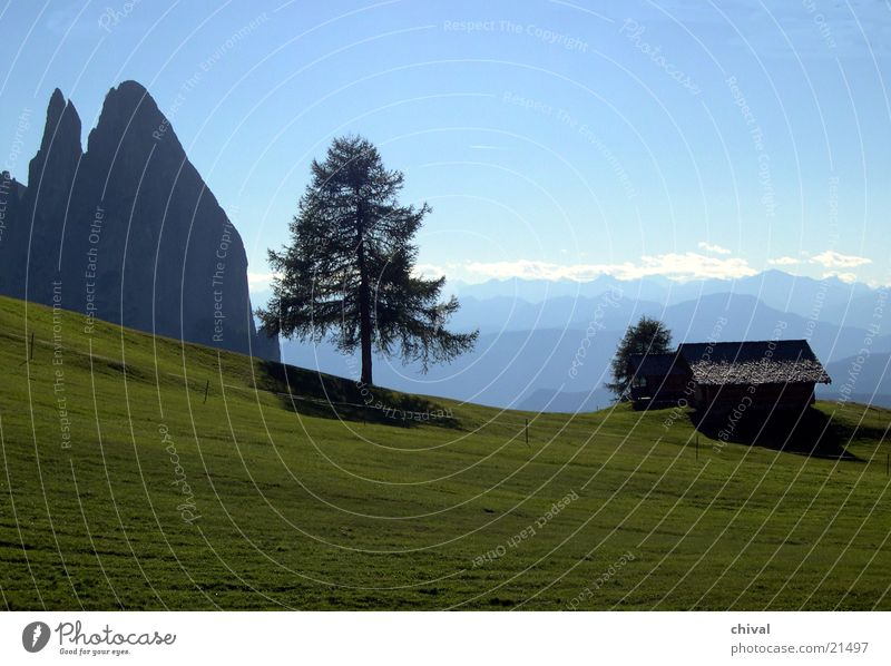 Tree Far-off places Meadow Mountain Fog Large Alps Hut Chain Alpine pasture Dolomites