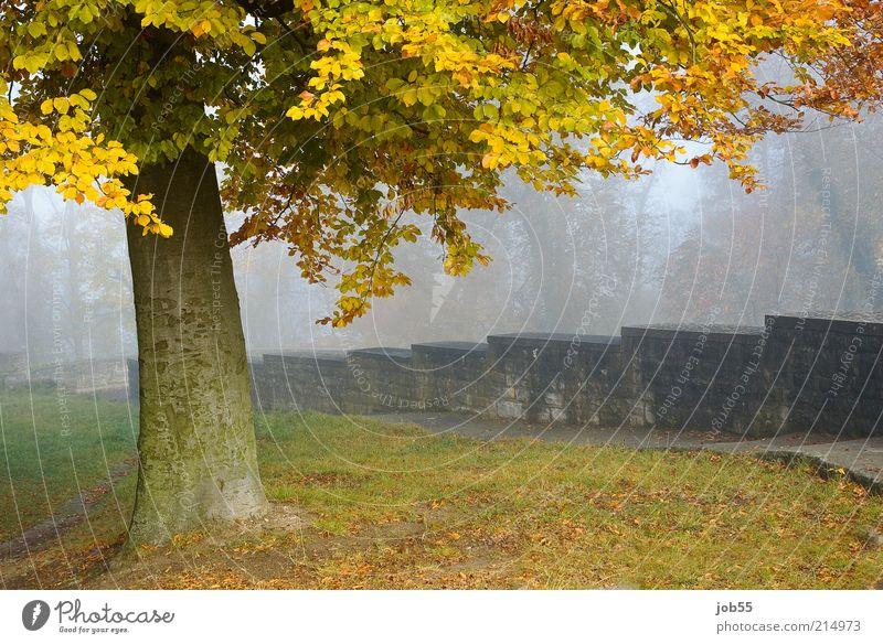 Nature Tree Calm Autumn Wall (building) Wall (barrier) Lanes & trails Park Landscape Fog Romance Peace Castle Ruin Landmark