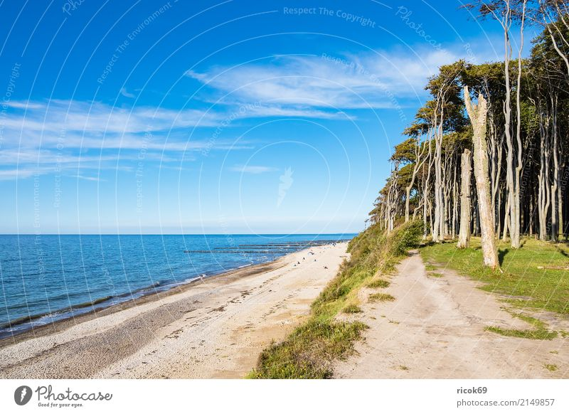 Coastal forest at the Baltic Sea near Nienhagen Relaxation Vacation & Travel Tourism Beach Ocean Waves Nature Landscape Water Clouds Tree Forest Lanes & trails