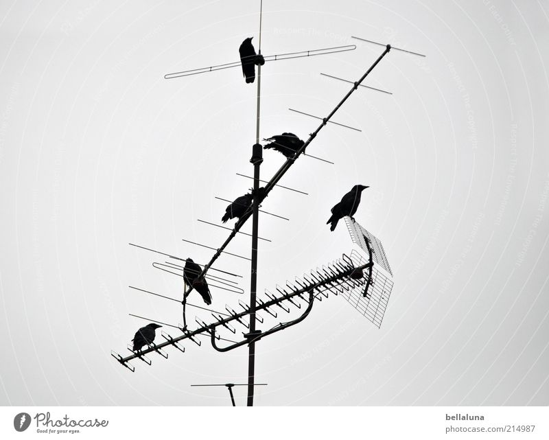 Sky Nature Winter Animal Environment Weather Bird Sit Group of animals Wild animal Beautiful weather Antenna Flock Crow Raven birds Technology