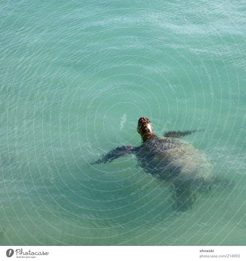 Water Old Ocean Animal Air Wild animal Breathe Environment Turtle Surface of water Turles