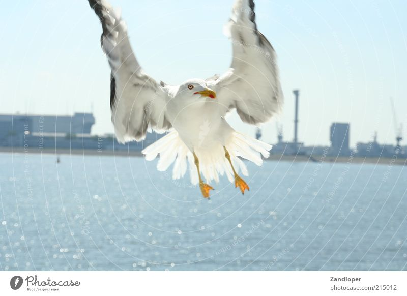 Water White Animal Gray Bird Flying Near Wing Natural Dynamics Flight of the birds