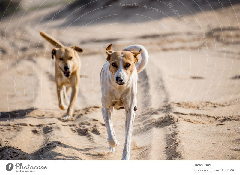 Nature Dog White Sun Animal Beach Movement Playing Happy Brown Jump Pair of animals Wild animal Walking Beautiful weather Group of animals