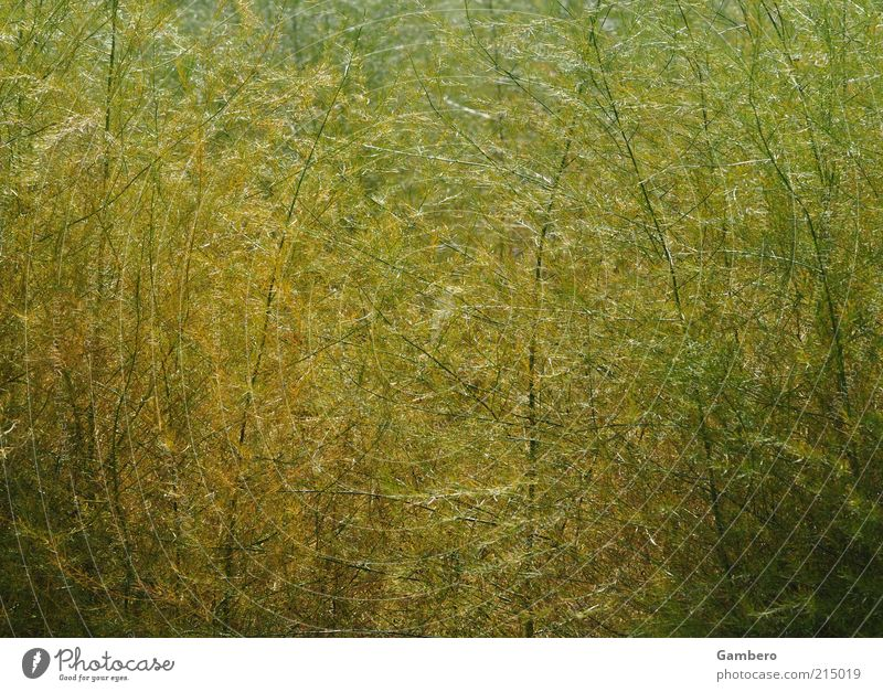 Nature Green Plant Yellow Autumn Grass Brown Thin Delicate Long Beautiful weather Wild plant Bright green Dark green Bright yellow
