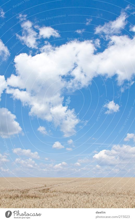 heaven day cloudy Landscape Sky Clouds Horizon Autumn Beautiful weather Agricultural crop Field Blue Sky blue Clouds in the sky Cloud formation Cloud pattern