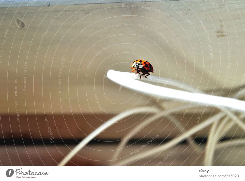 Nature Plant Life Wood Sit Near Ladybird Diligent Determination