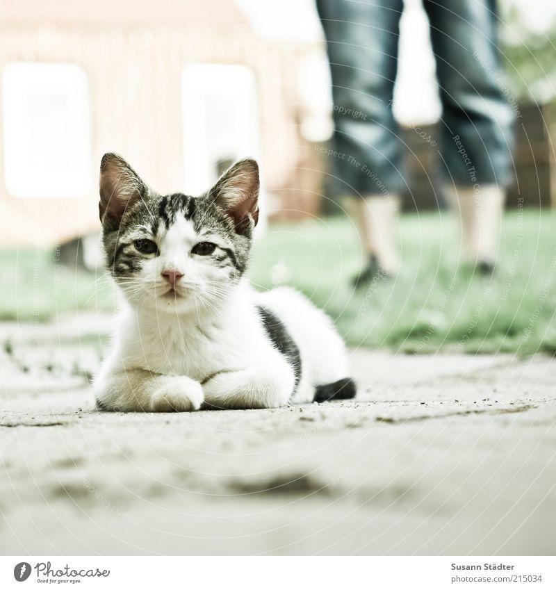 Man Adults Animal Meadow Cat Garden Legs Baby animal Wait Lie Cute Jeans Observe Animal face Curiosity Pelt