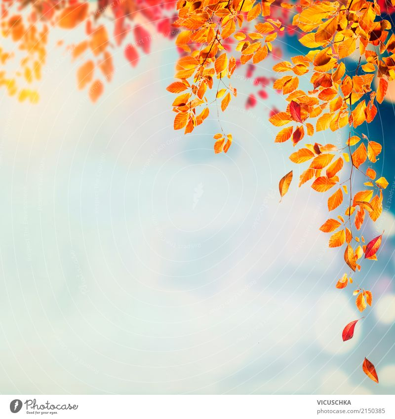 Autumn nature background with beautiful tree leaves Design Garden Nature Plant Beautiful weather Tree Leaf Park Yellow Background picture Seasons Deciduous tree