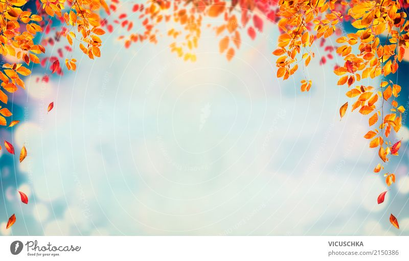 Autumn background with falling tree leaves Lifestyle Design Garden Nature Landscape Plant Tree Bushes Leaf Park Yellow Background picture Sky Multicoloured