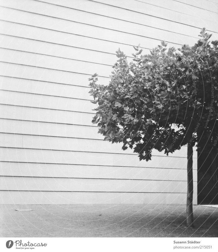 Tree Loneliness House (Residential Structure) Wall (building) Architecture Wall (barrier) Line Facade Door Gloomy Manmade structures Dome Consistent