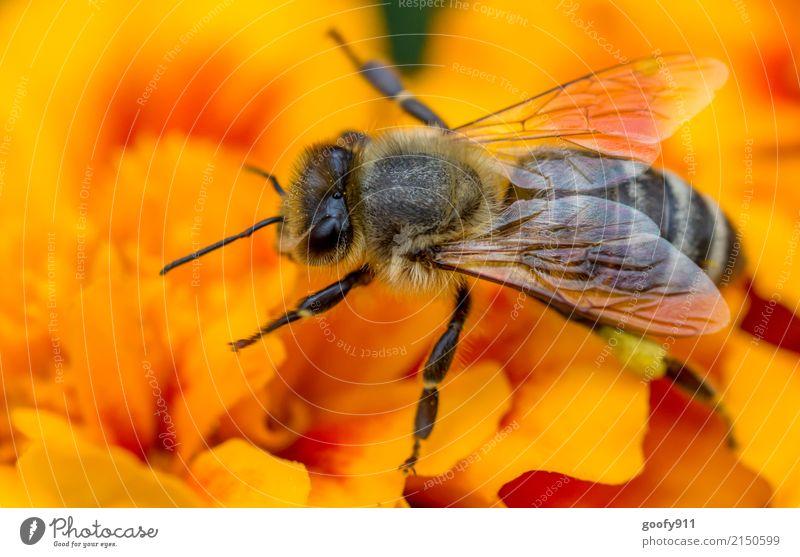 Bee yoga;-) Elegant Garden Environment Nature Animal Sun Spring Summer Plant Flower Blossom Wild plant Park Meadow Farm animal Wild animal Animal face Wing Pelt