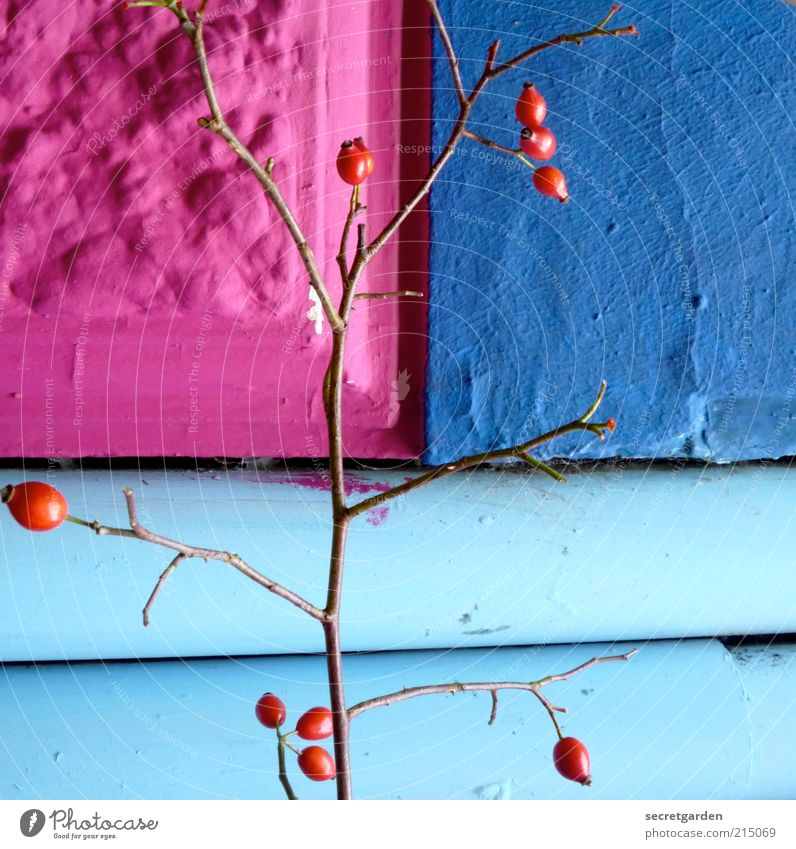 Beautiful Blue Red House (Residential Structure) Wall (building) Stone Wall (barrier) Building Line Architecture Pink Fruit Facade Perspective Growth Decoration