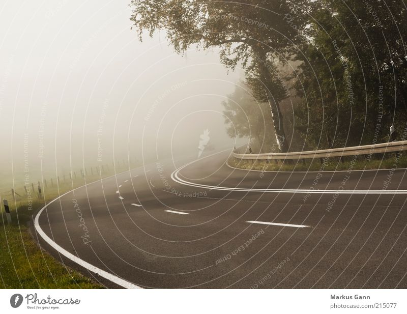 Nature Tree Vacation & Travel Street Autumn Car Air Line Brown Fog Weather Environment Transport Closed Perspective