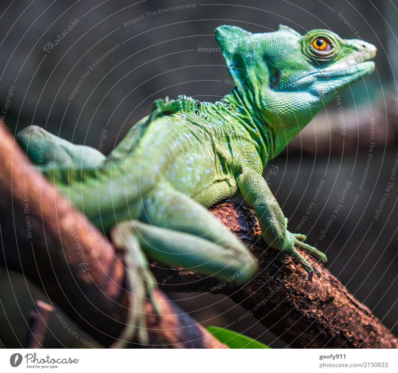 Green Dino ;-)))) Safari Expedition Environment Nature Tree Branch Forest Virgin forest Animal Wild animal Animal face Scales Paw Zoo Saurians Reptile eye 1