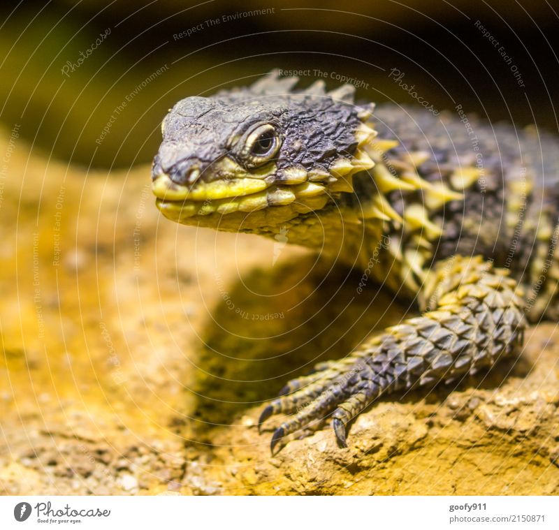 Nature Summer Animal Yellow Environment Spring Exceptional Elegant Wild animal Stand Dangerous Observe Discover Desert Creepy Exotic