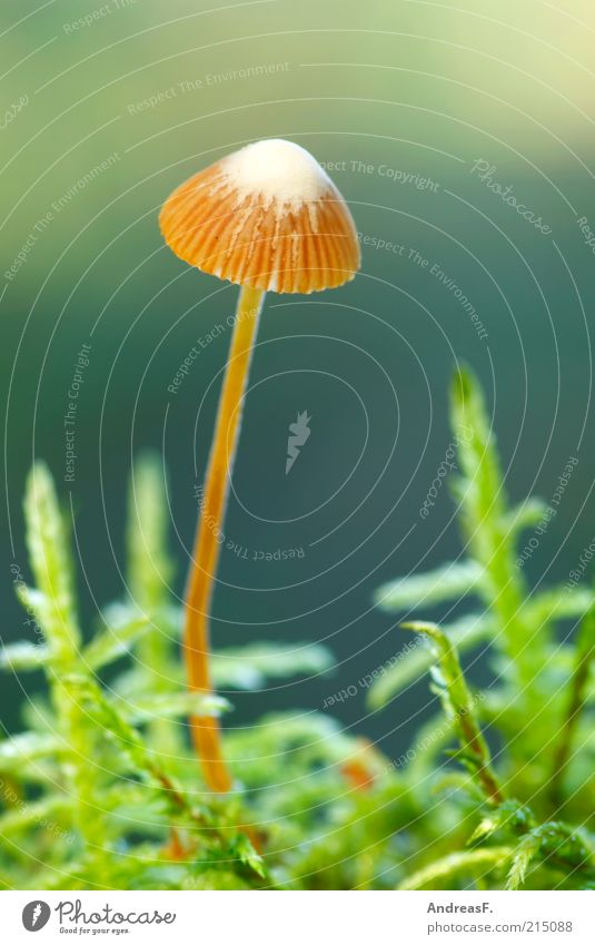 Nature Green Plant Autumn Small Environment Thin Mushroom Moss Woodground Mushroom cap Autumnal Brownish