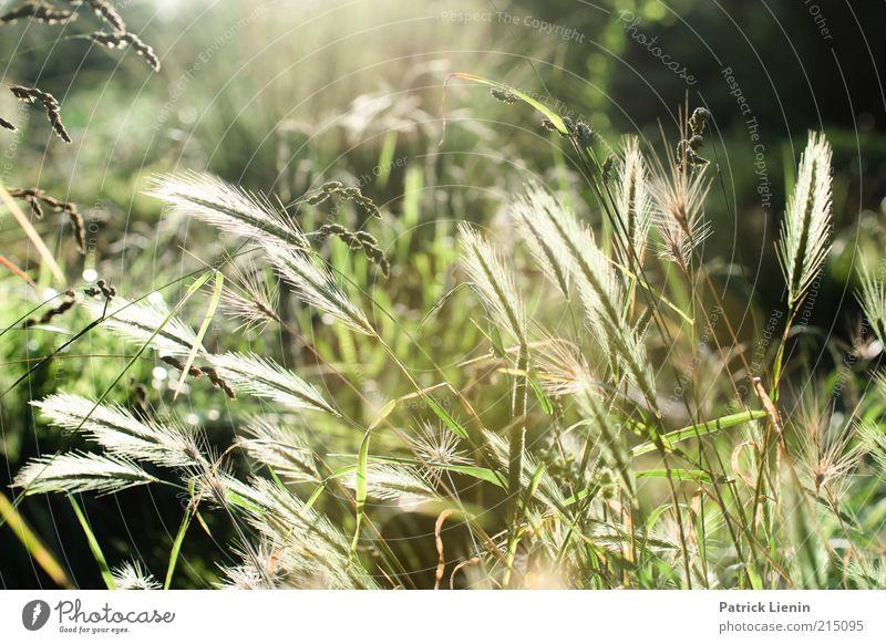 forget about summer Environment Nature Landscape Plant Elements Summer Climate Grass Bushes Leaf Blossom Foliage plant Wild plant Esthetic Exceptional