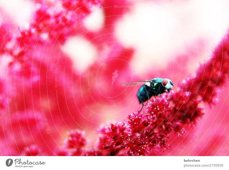 Nature Plant Summer Beautiful Flower Red Animal Eyes Blossom Meadow Exceptional Garden Flying Pink Park Wild animal