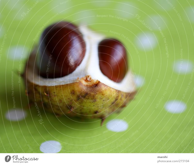 Nature Green Plant Autumn Brown Fruit Decoration Chestnut Spotted Autumnal Bright green