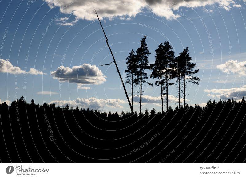 Nature Sky Tree Clouds Far-off places Forest Landscape Beautiful weather Scandinavia