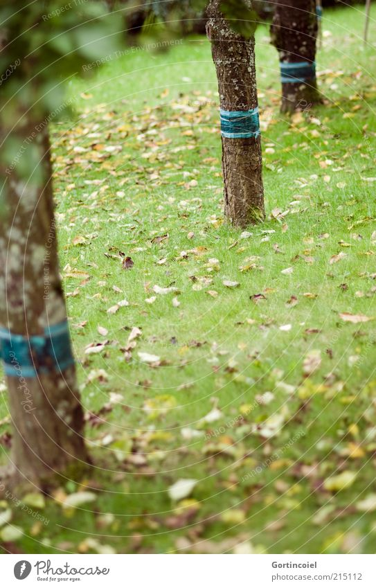 Nature Tree Leaf Meadow Autumn Grass Garden Environment Signs and labeling Gloomy Tree trunk Autumn leaves Deciduous tree Autumnal