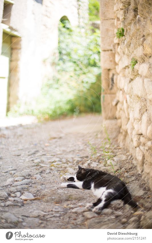 after-lunch nap Vacation & Travel Tourism Sightseeing City trip Spring Summer Beautiful weather Village Wall (barrier) Wall (building) Pet Cat 1 Animal Yellow
