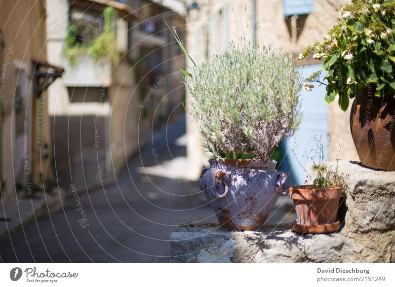 Rosemary of Provence Organic produce Vacation & Travel Tourism Trip Sightseeing City trip Plant Animal Spring Summer Beautiful weather Warmth Agricultural crop
