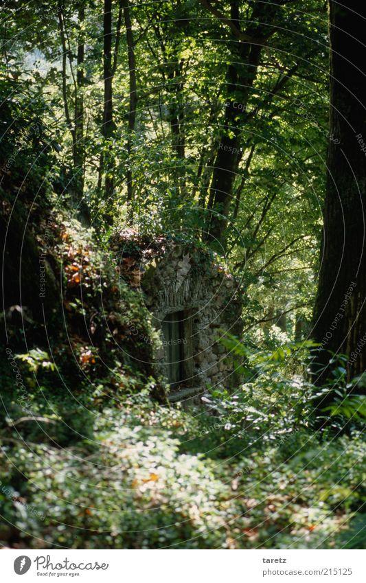cellardoor Nature Old Tree Summer Calm Forest Bushes Wild Fantastic Mysterious Cellar Undisturbed Hiding place Hidden Dugout Sunbeam